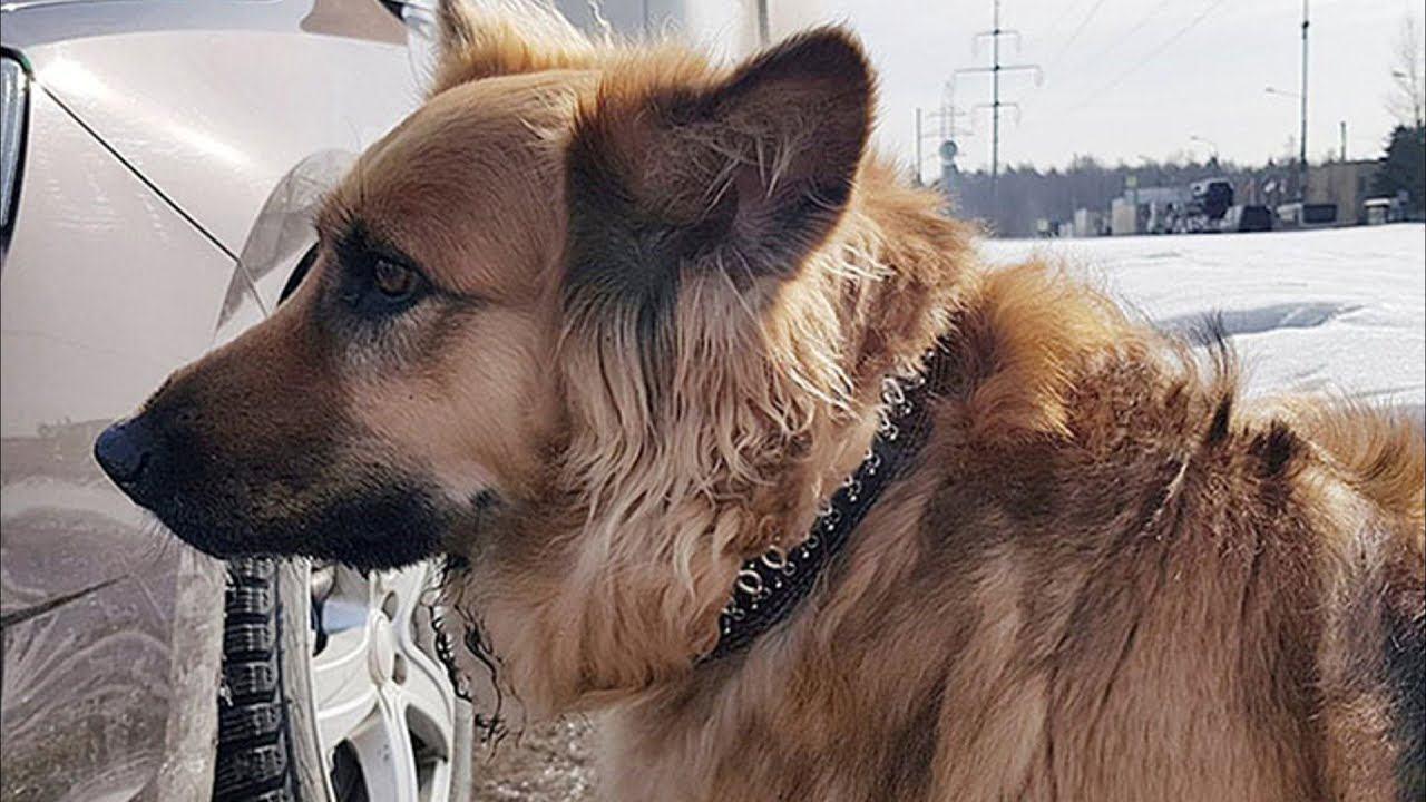 «Жалею, что не грохнул»: Москвич рассказал, что выбросил свою домашнюю собаку из-за ее трусости