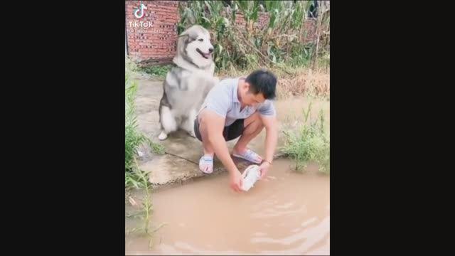 Ох уж эти Собаки, вечно куда-то Встрянут ))))   #приколы #смешныевидео #юмор #тикток #shorts 384