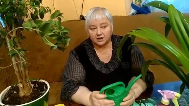 Комнатные растения Уход за комнатными растениями. Урок Окружающий мир 2 класс