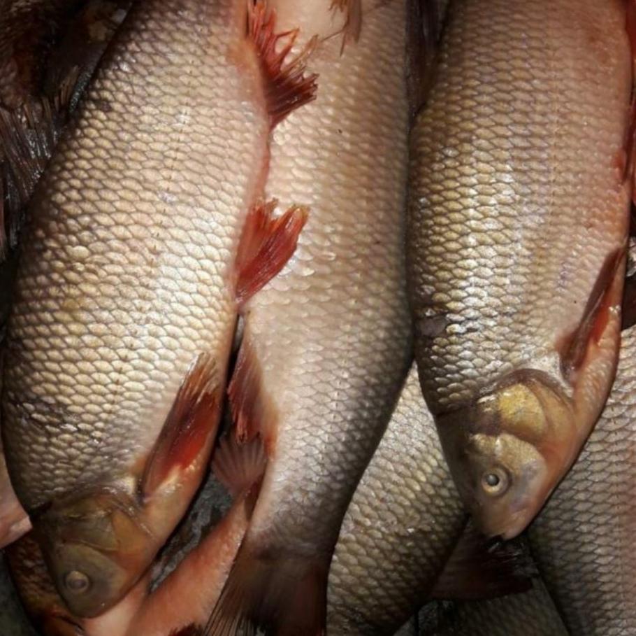 Рыбалка Новосибирск. Белые росы. 14 сентября 2021.