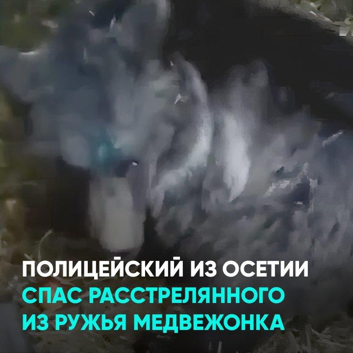 Полицейский из Осетии спас расстрелянного из ружья медвежонка