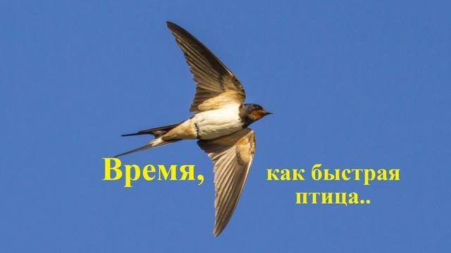 Время, как быстрая птица...