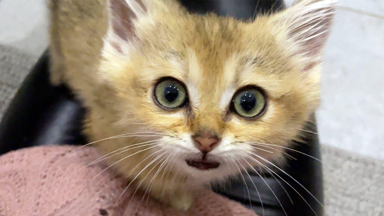 ОТКУДА КОШКИ МОГЛИ ПОДХВАТИТЬ САЛЬМОНЕЛЛУ / Как поживают Мелисса с котятами, Марго, Глаша и Микки