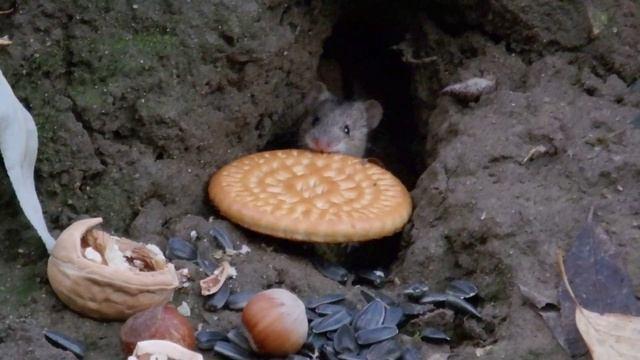Мыши и печеньки