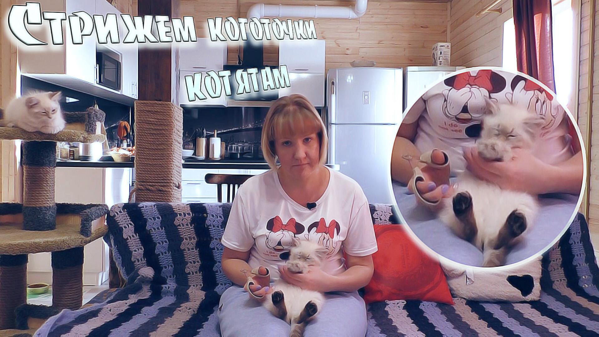 Сибирские Невские Маскарадные Кошки - Стрижем коготочки котятам🙀