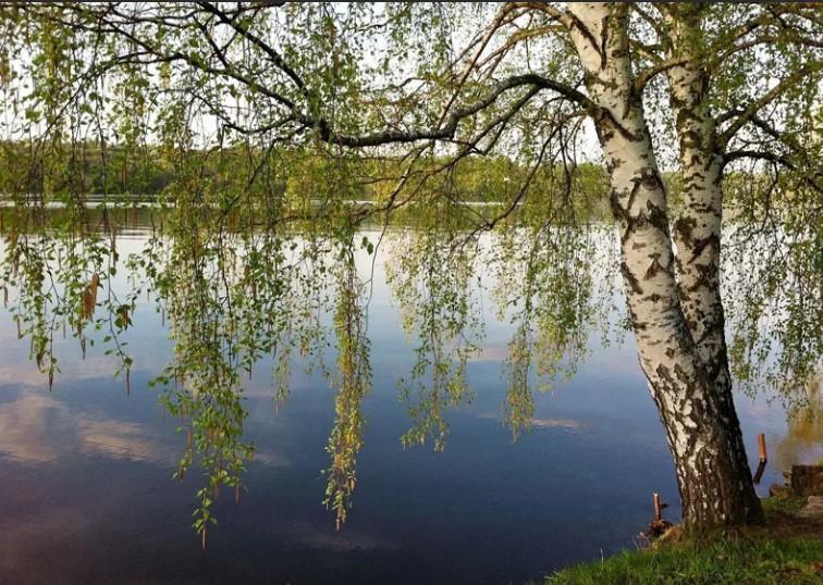 Два дерева. Автор Макарова Наташа. Стихи о жизни.