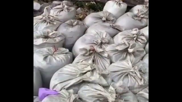 На Алтае рабочие перевязали мешки с мусором георгиевскими ленточками
